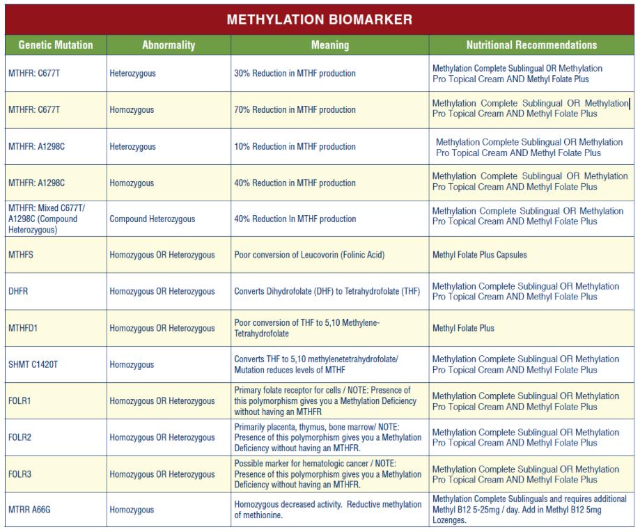 MTHFR Nutrition   MTHFR Supplements   Neurobiologix